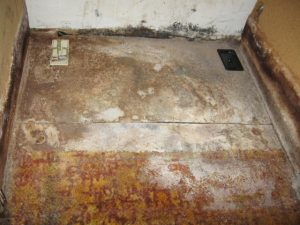 Mold Removal Grand Island, Mold Damage Grand Island