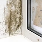 Mold Removal Grand Island, Mold Inspection Grand Island, Mold Damage Grand Island