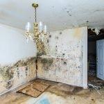 mold removal kearney, mold cleanup kearney